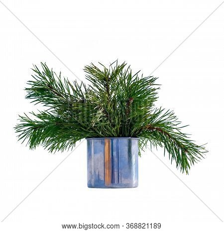 Isolated Pine Twigs In An Iron Mug. Coniferous Twigs For Decoration. Winter Still Life Isolated On W