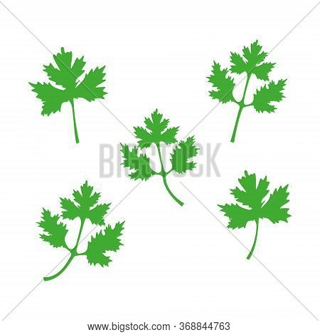 Green Coriander Leaves Set Vector Illustration Isolated On White. Cilantro Icon Symbol.