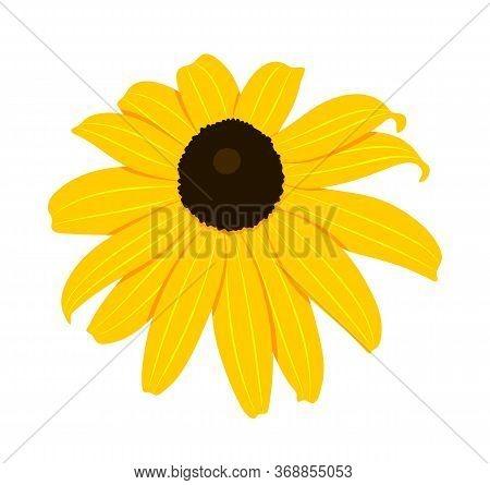Vector Coneflower - Black-eyed-susans (rudbeckia Hirta) Isolated On White Background
