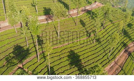 Aerial View Of Drone Tea Plantations In The Vicinity Of The City Of Munnar. Kerala. India.