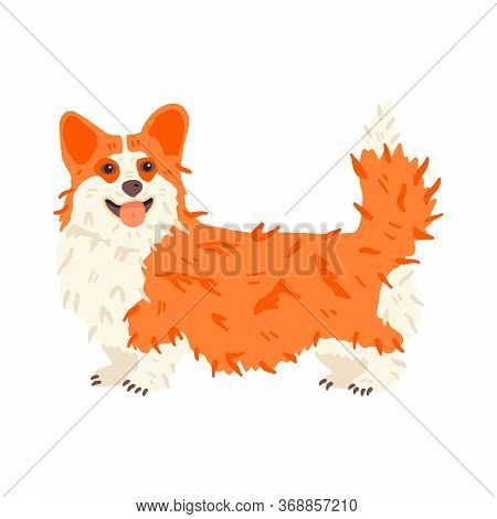 Funny Corgi Vector Flat Illustration. Cute Dog Breed With Smile. For Pet Shops And Grooming Salon La