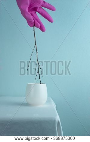 Hot White Tea Ceramic Cup With Dry Wood Branch In Zen Style With Weird Hand In  Colorful Pink Plasti