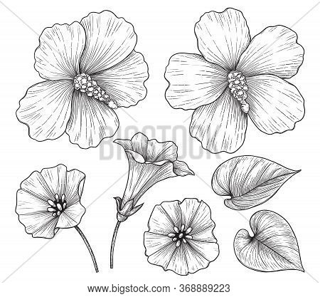 Hand Drawn Hibiscus And Bindweed Flowers Isolated On White Background. Monochrome Floral Set In Vint