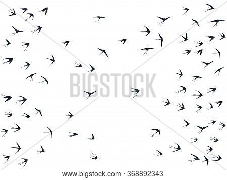Flying Swallow Birds Silhouettes Vector Illustration. Nomadic Martlets Bevy Isolated On White. Pinio
