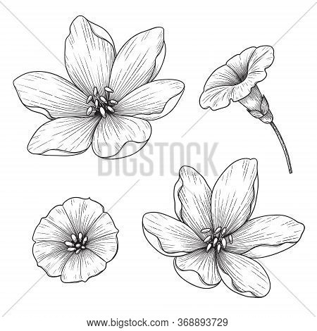 Hand Drawn Lily And Bindweed Flowers Isolated On White Background. Monochrome Floral Set In Vintage