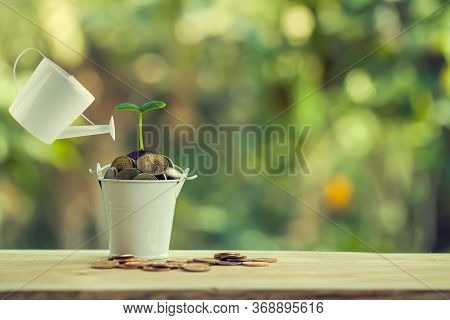 Finance And Banking, Saving Money Concept: Pours Water From A Watering Can, Green Sprout On Bucket F