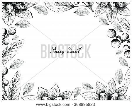 Berry Fruit, Illustration Frame Of Hand Drawn Sketch Of Dwarf Whitebeam, False Medlar Or Sorbus Cham