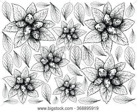 Berry Fruit, Illustration Hand Drawn Sketch Of Dwarf Whitebeam, False Medlar Or Sorbus Chamaemespilu
