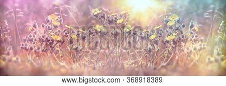 Beautiful Nature, Yellow Flowers Lit By Sunlight (sunrays) Beautiful Landscape In Meadow