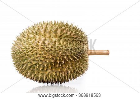 Popular Malaysian Durian D101 Breed Against White Background