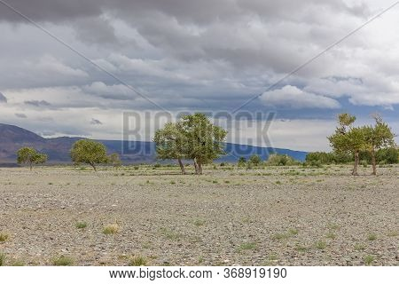 Mongolia Landscape. Altai Tavan Bogd National Park In Bayar-ulgii. Trees Grow In The Rocky Soil Of T