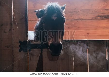 Brown Horse In The Stable. Horse In His Aviary. Stable With Animals. Horse Through The Cage. Smoke F