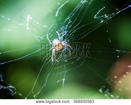 Little Spider On The Net Macro Photography