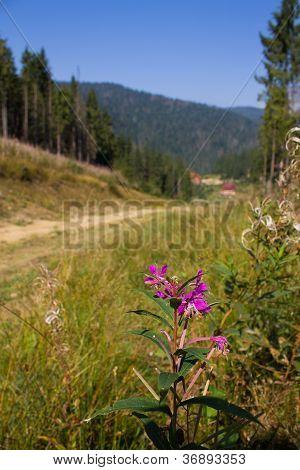 Flower In Mountain