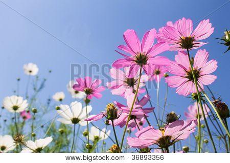 Flowers On Sky Background