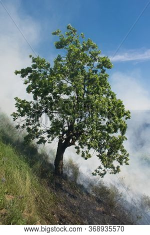 Smoke Frome Fire In Forest Around The Tree