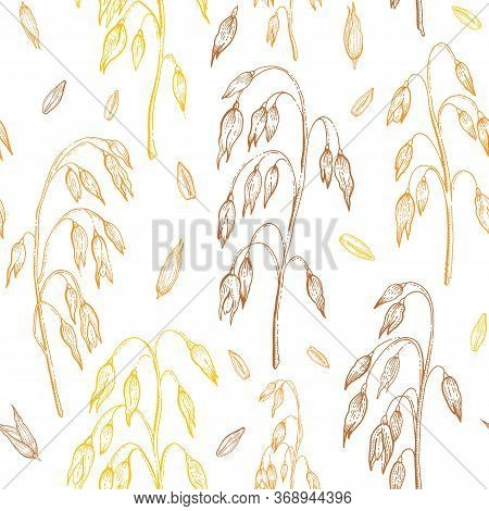 Oats Vector Pattern. Oatmeal Seamless Background. Cereal Grain Ears Illustration. Hand Drawn Vintage