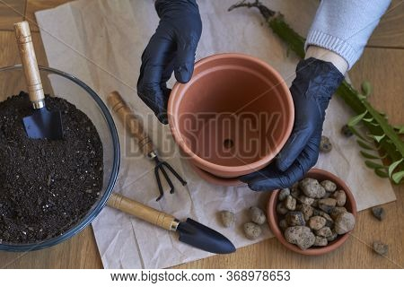 Step By Step Transplanting Home Plant Aloe Vera Into Clay Flower Pot, Female Hands Transplant Plant