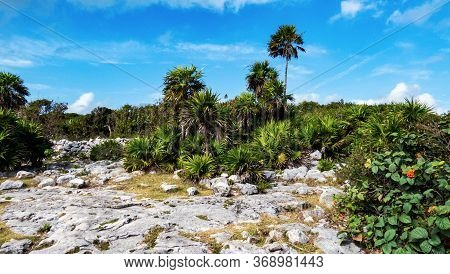Tropical Nature And Leaves Close To The Ancient Mayan City Of Tulum In Quintana Roo, Mexico.