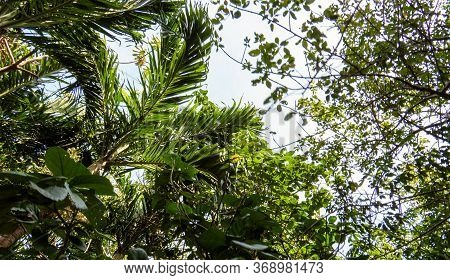 Tropical Leaves And Nature From The Inside Of The Ancient Mayan City Of Tulum In Quintana Roo, Mexic