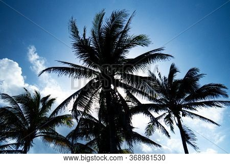 Dark Palm Tree Silhouettes With The Sun Behind Viewed From The Inside Of The Ancient Mayan City Of T