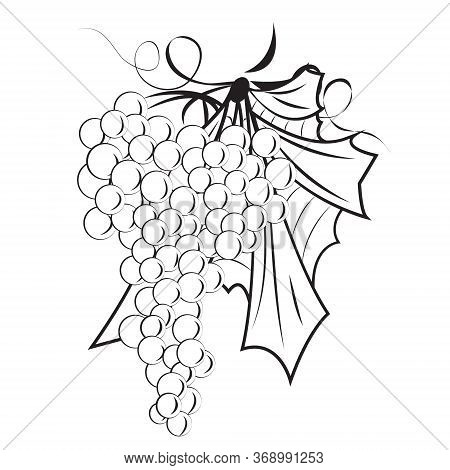 A Bunch Of Grapes Outline Vector Illustration On A White Background Isolated