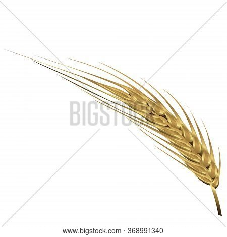 Of Wheat Vector Illustration Isolated On A White Background
