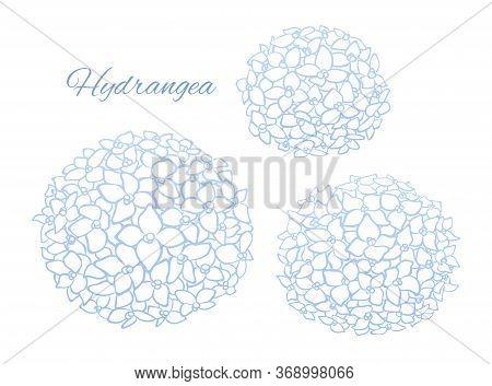 Soft Blue Outline Hydrangea Blooms, Vector Art