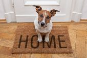 dog welcome home on brown mat and door poster