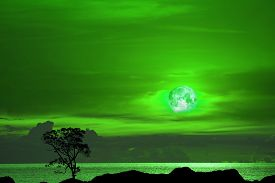 Flower  Green Moon And Tree On The Silhouette Mountain On Sunset Sky
