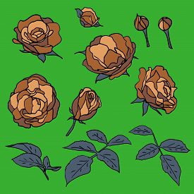 A Set Of Coffee Colored Roses With Leaves And Buds. Hand-drawn Floral Flat Motifs With Black Outline