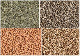 Set Of Food Background: Coriander, Lentil, Brown Rice And Sugar.