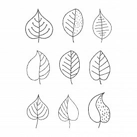 Vector Set Of Hand-drawn Plant Leaves. Empty Outline Isolated On A White Background For Theme Design