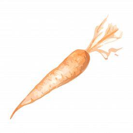Orange Monochrome Carrot Vegetable Simple Illustration Sketch Art Vector