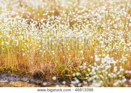 Kradumngen Blume