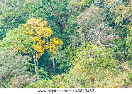Tropischen Regenwald