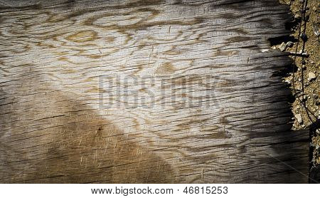 Close up of a piece of wood grain on a stony sand background poster