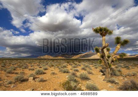 Joshua Tree In The Mojave