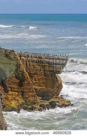 Sea Birds On A Coastal Promontory