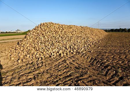 Acres With Sugar Beets