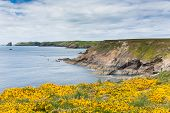 Wales coastal scene towards Skomer Island Pembrokeshire, area known for Puffins, wildlife and a National Nature Reserve poster