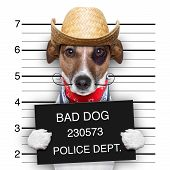 mugshot of a mexican very bad dog poster