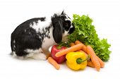 rabbit and vegetables on a white background poster