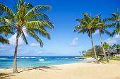 Coconut Palm tree on the sandy Poipu beach in Hawaii Kauai poster