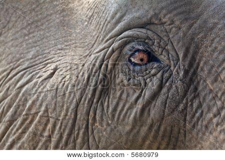 Close-up Elephant Eye.