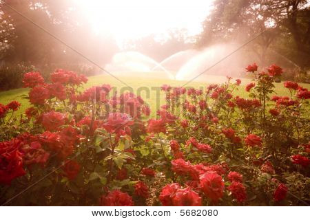 Enchanted Scene With Roses