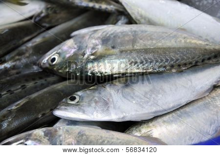 Mackerel Fish Food Fresh Thailand