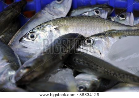 Mackerel Fish Food Thailand Fresh
