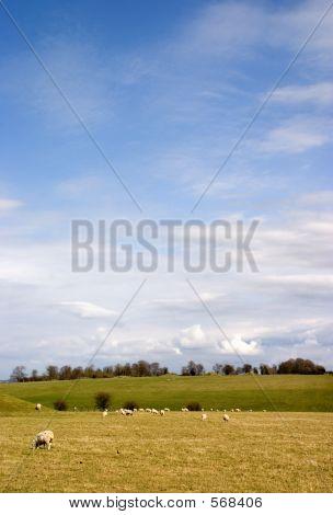 Blue Sky Pasture