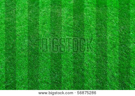 Green grass natural background. Football field